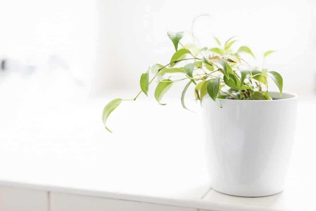 Bonus : des plantes
