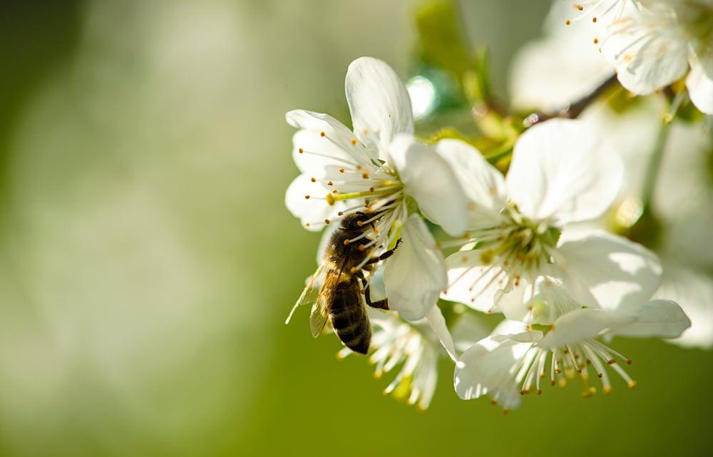 Comment reconnaître un nid d'abeilles d'un nid de guêpes?