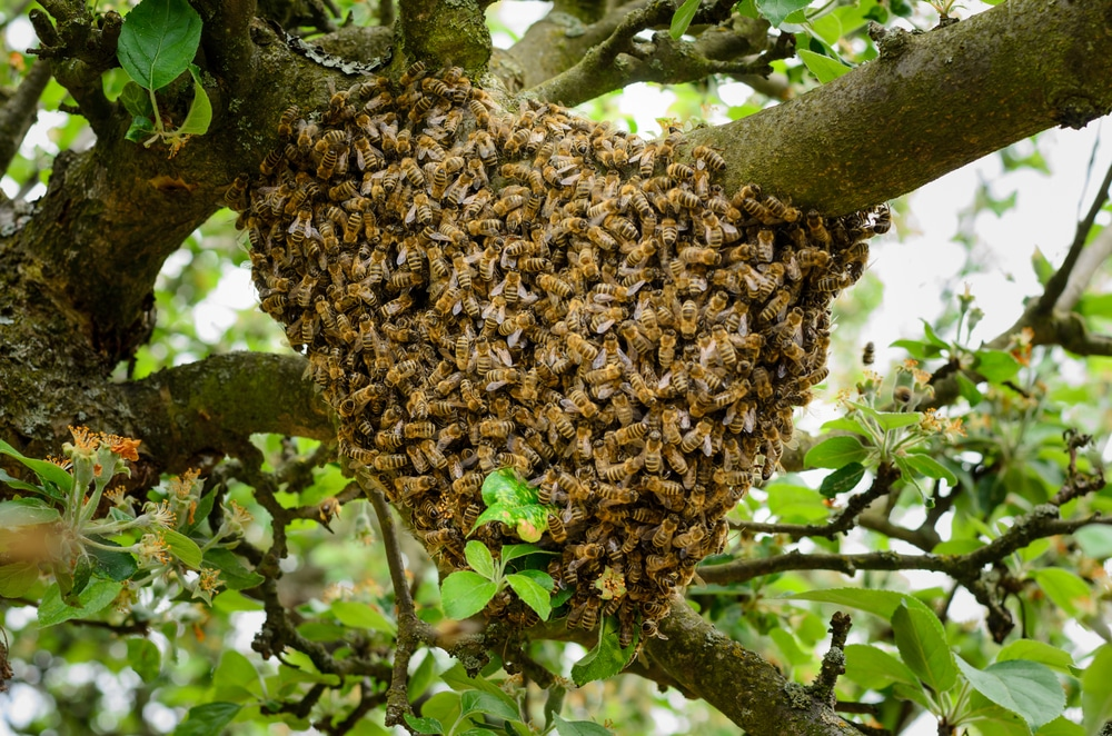 Comment se forme un nid d'abeilles?
