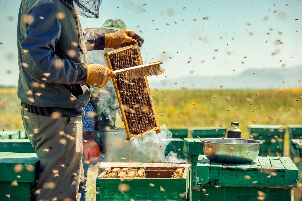 Il est interdit de détruire les nids d'abeilles