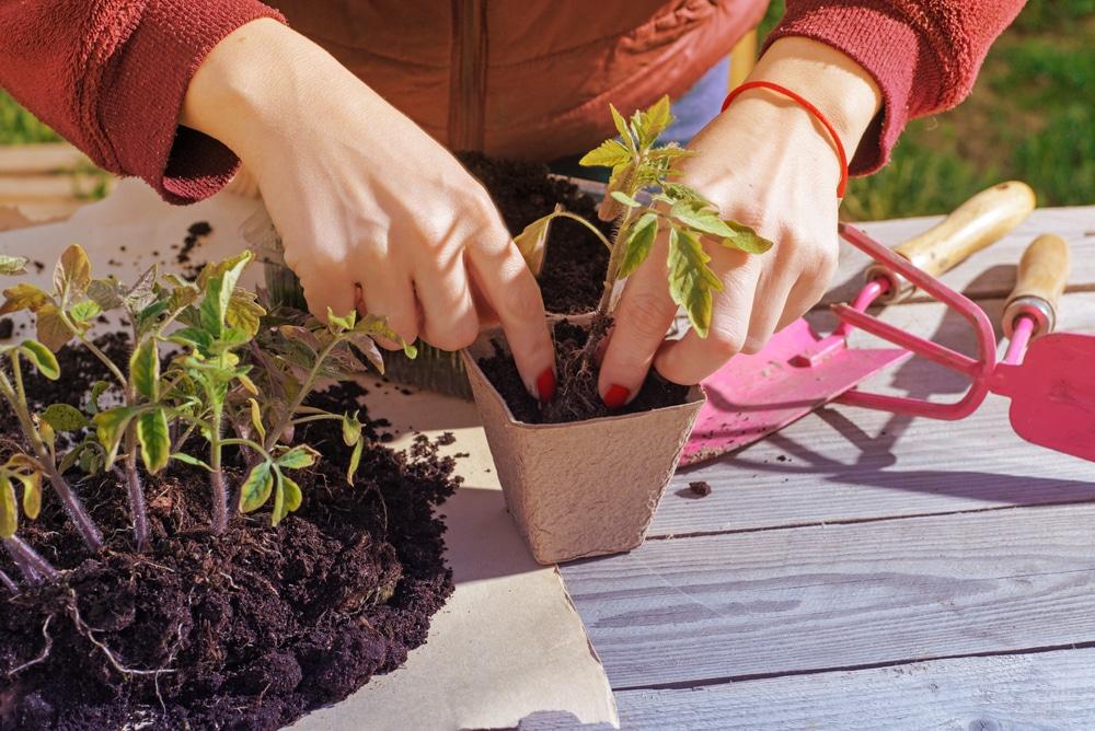 Bien choisir vos plantes, mais aussi votre matériel de jardinage